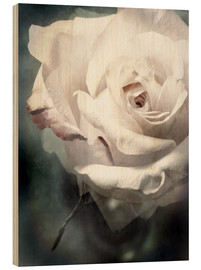 Cuadro de madera  Flower of a white rose - Alaya Gadeh