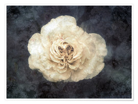Póster White rose superimposed with floral texture