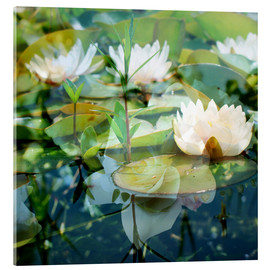 Metacrilato  Montage of white water lilies - Alaya Gadeh