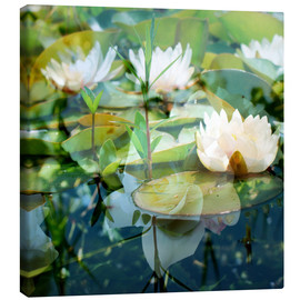 Lienzo  Montage of white water lilies - Alaya Gadeh