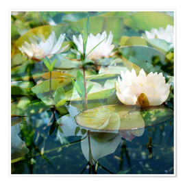 Póster Montage of white water lilies