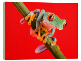Cuadro de madera  Tree frog on red