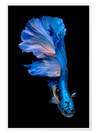 magnificent blue fish