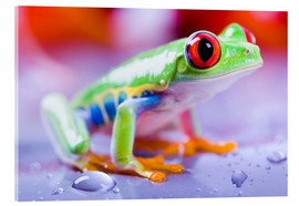 Cuadro de metacrilato  colorful frog
