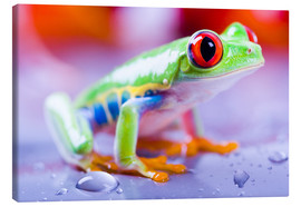 Lienzo  colorful frog
