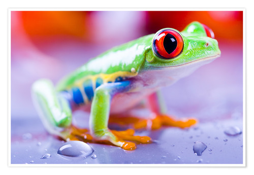 Póster colorful frog