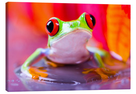 Lienzo  little green frog