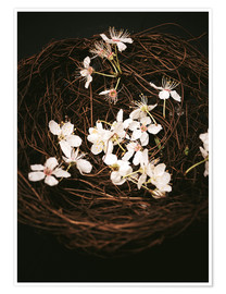 Póster  Cherry Blossoms in Nest - Sybille Sterk