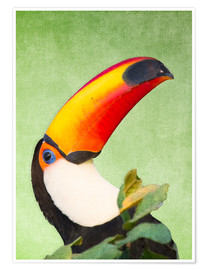 Póster A colourful toucan bird on a tropical background.