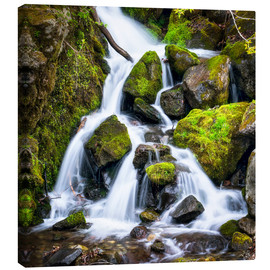 Lienzo  Waterfall in the forest near Triberg, Black Forest - Jan Christopher Becke