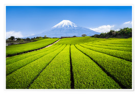 Póster Tea plantation with Mount Fuji in Shizuoka, Japan