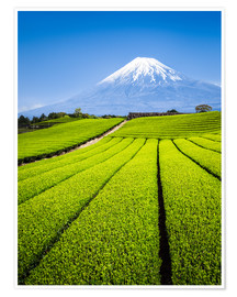 Póster Tea Plantation and Mount Fuji in Shizuoka, Japan