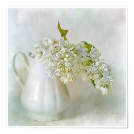 Póster  White Lilac - Lizzy Pe