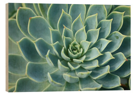 magnificent Succulent