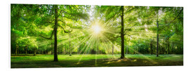 Cuadro de PVC  Green Forest Panorama in sunlight - Jan Christopher Becke