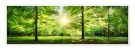 Póster Green Forest Panorama in sunlight