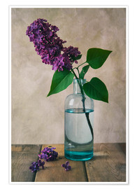Póster Still life with fresh lilac flower