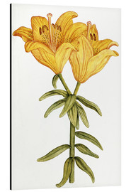 Cuadro de aluminio  Yellow Lily - French School