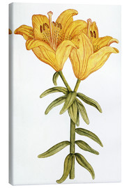 Lienzo  Yellow Lily - French School