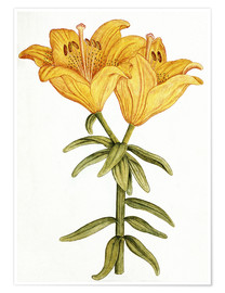 Póster  Yellow Lily - French School