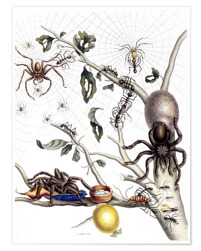Póster Various Arachnids from South America