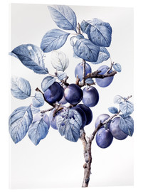 Cuadro de metacrilato  Branch of a plum with fruits - Pierre Joseph Redouté