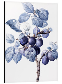 Cuadro de aluminio  Branch of a plum with fruits - Pierre Joseph Redouté