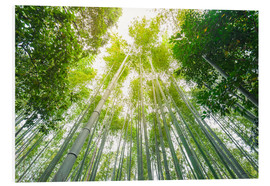 Cuadro de PVC  Light falls through the bamboo forest