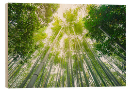 Madera  Light falls through the bamboo forest