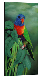 Cuadro de aluminio  colorful Rainbow lorikeet - Monica Schwarz