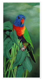 Póster colorful Rainbow lorikeet