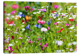 Lienzo  Flower meadow - fotoping