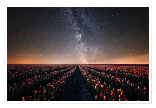 Póster Tulip field and Milky Way