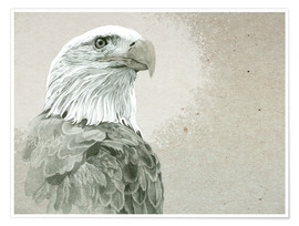 Póster  Bald Eagle Majestic - Ashley Verkamp