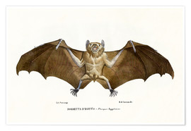 Póster  Egyptian Fruit Bat - Raimundo Petraroja