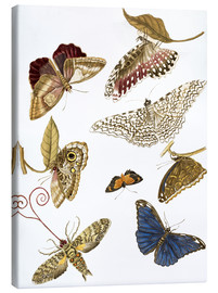 Lienzo  Moths and butterfiles - Maria Sibylla Merian