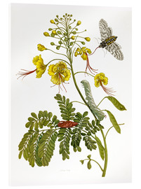Cuadro de metacrilato  A moth and a caterpillar - Maria Sibylla Merian