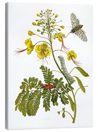 Lienzo  A moth and a caterpillar - Maria Sibylla Merian