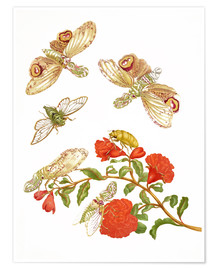 Póster  Pomegranate with Lantern Fly and Cicada - Maria Sibylla Merian