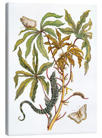 Lienzo  cassava with crocodile and butterfly metamorphosis - Maria Sibylla Merian