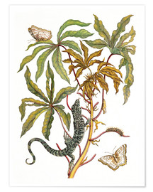 Póster  cassava with crocodile and butterfly metamorphosis - Maria Sibylla Merian