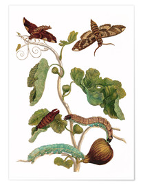 Póster fig tree with lepidoptera metamorphosis