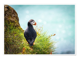 Póster  Puffin looking at the Sea - Sascha Kilmer