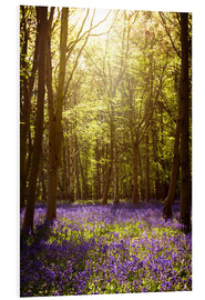Cuadro de PVC  Sunny forest with bluebells - Sybille Sterk