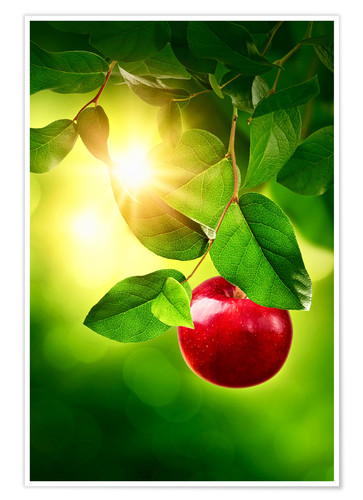 Póster Red apple