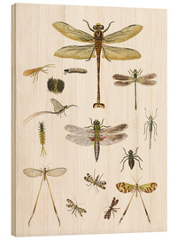 Cuadro de madera  Strange insects - German School