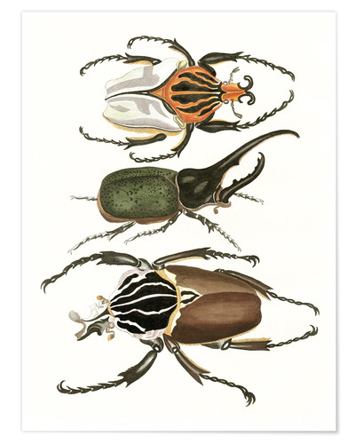 Póster Large and rare beetles