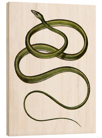 Cuadro de madera  Long-nosed Tree Snake - German School