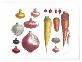 Póster  Various Vegetables, including onions and carrots - E. Champin and Mlle. Coutance