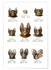 Póster  Different Kinds Of Bats - Karl Joseph Brodtmann